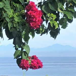 Bougainvillea View